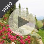 miniatura_video_1_2