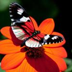 Parco_botanico_fiori_01