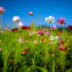 Parco_botanico_fiori_02