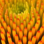 Parco_botanico_fiori_03