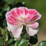 Parco_botanico_fiori_04