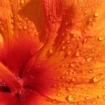 Parco_botanico_fiori_07
