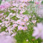 Parco_botanico_fiori_10