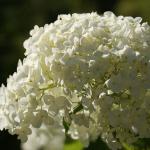 Parco_botanico_fiori_11