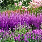 colori_dei_fiori_miniatura