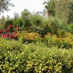 colori_e_profumi_giardino_05