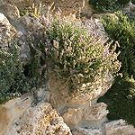 giardini_rocciosi_miniatura