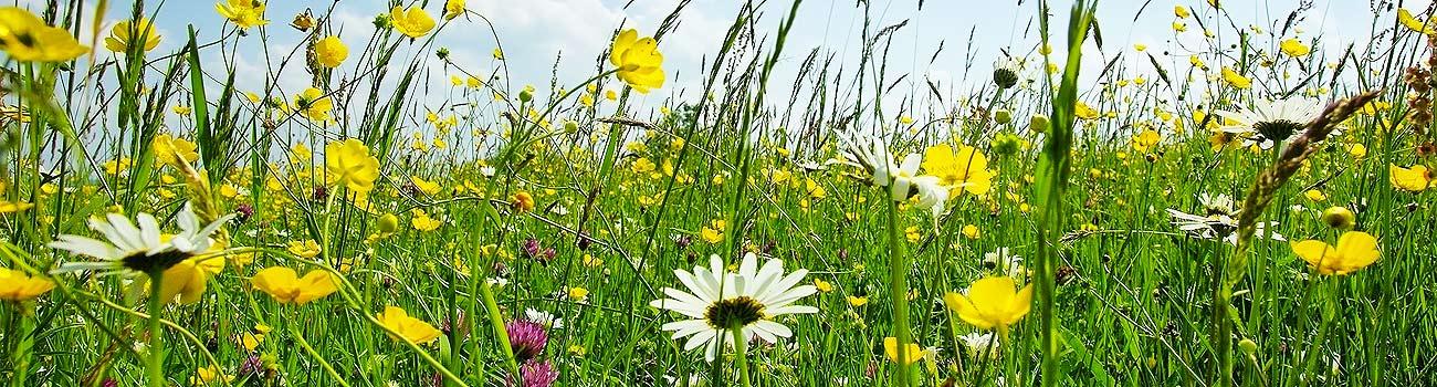 Parco_botanico_slider_04