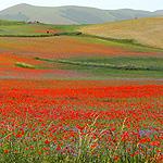colori_naturali_di_Castelluccio