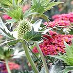gardens_miniatura
