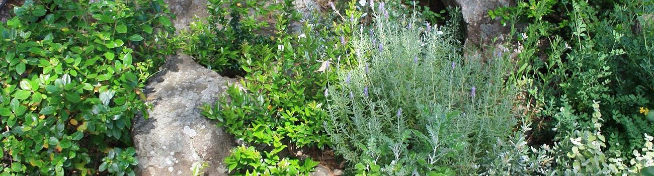 Giardini rocciosi gabriele pazzaglia landscape workshop for Giardini rocciosi piccoli