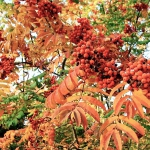 colori_autunno_01