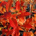 colori_autunno_02