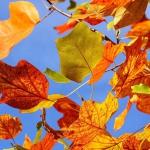 colori_autunno_03