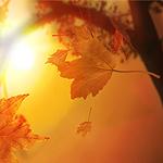 colori_autunno_miniatura